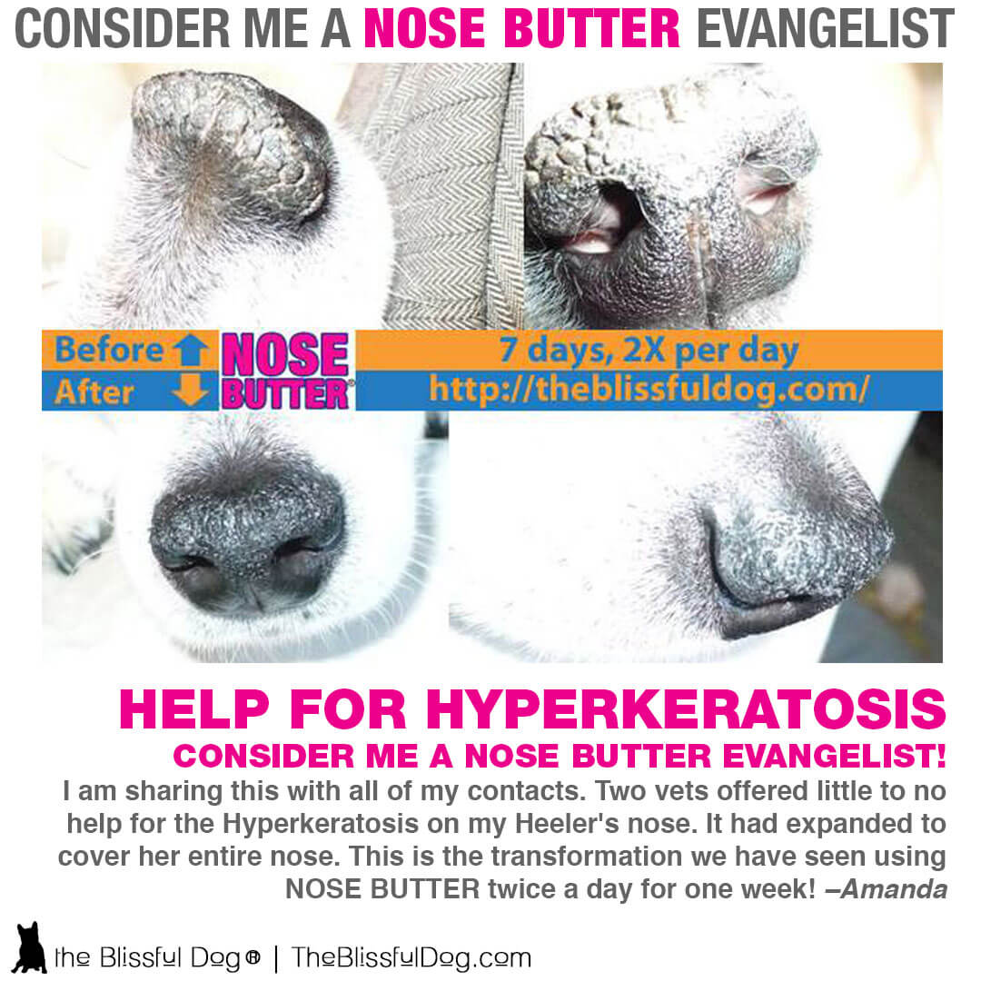nose butter for dogs review