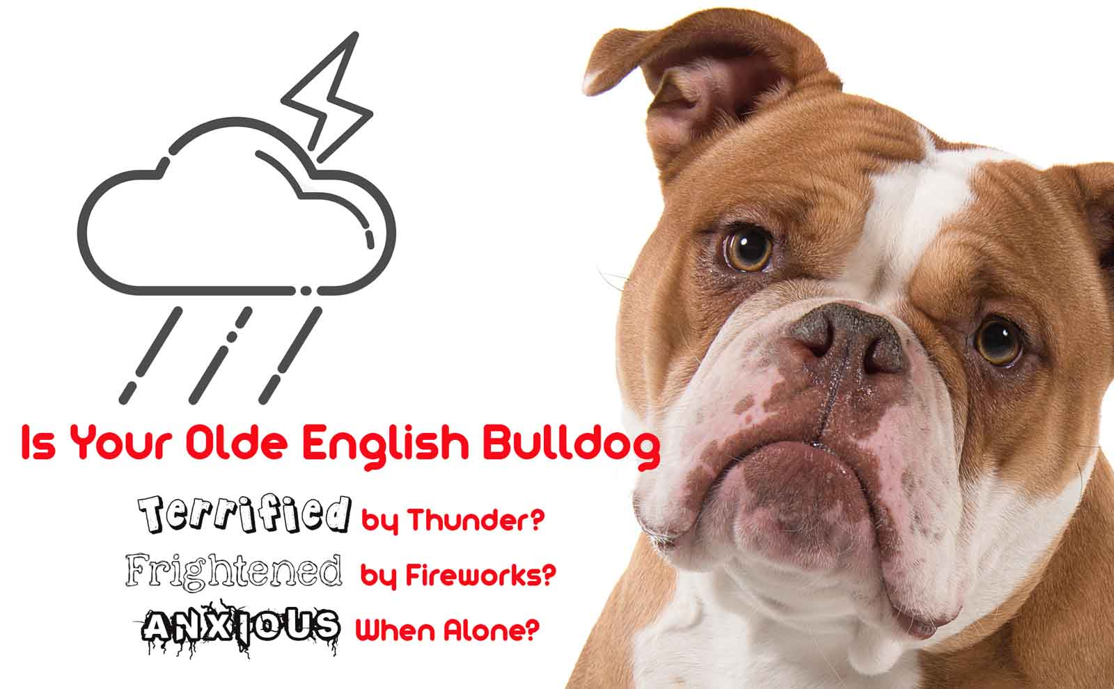olde english bulldogge afraid
