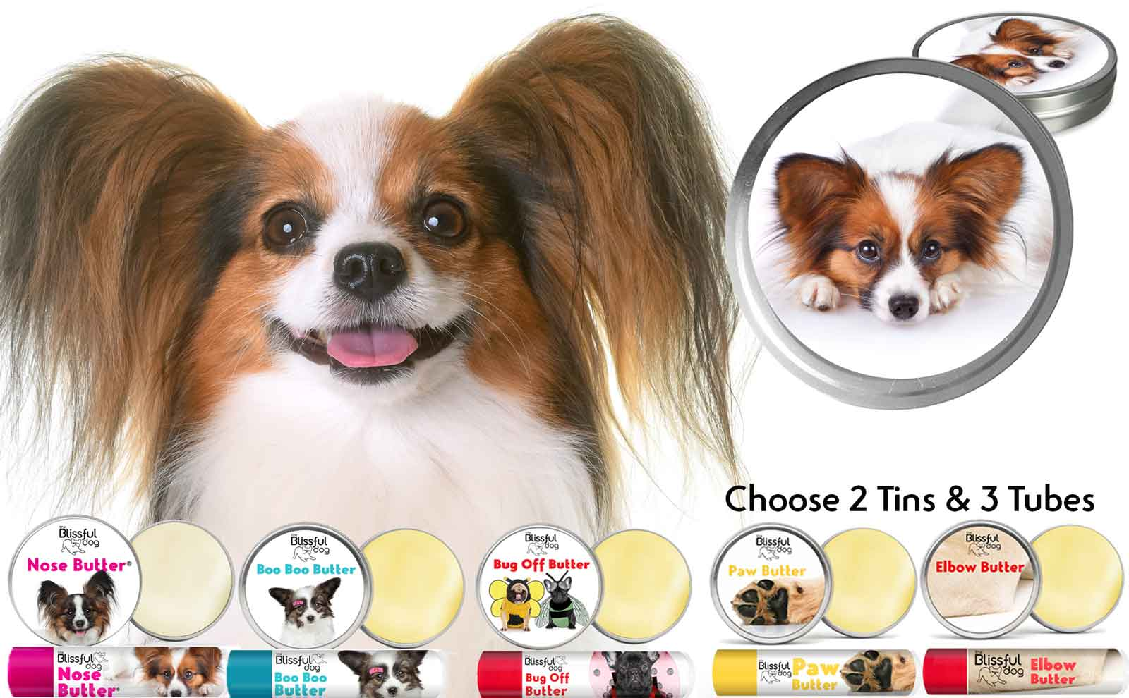 papillon dog skin care