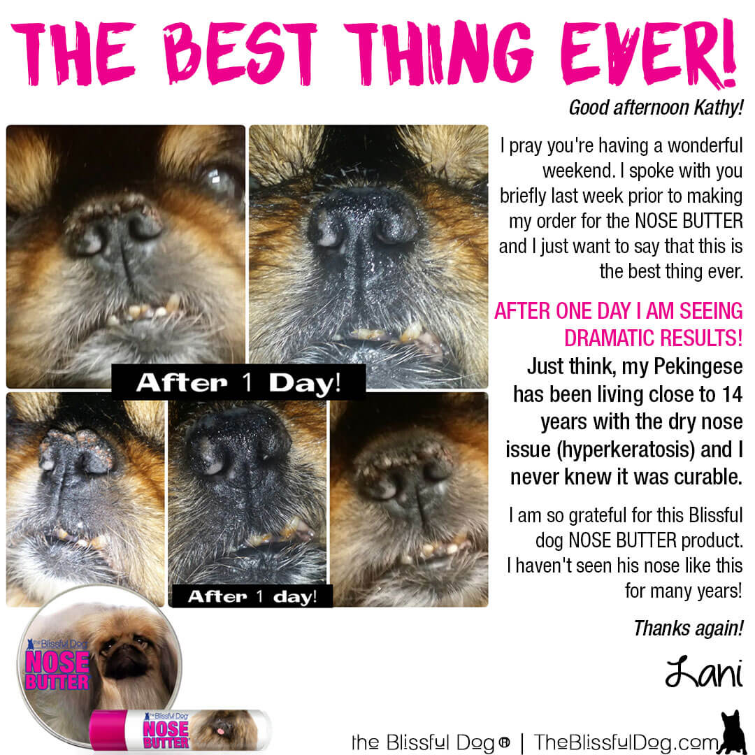 pekingese nose butter before and after