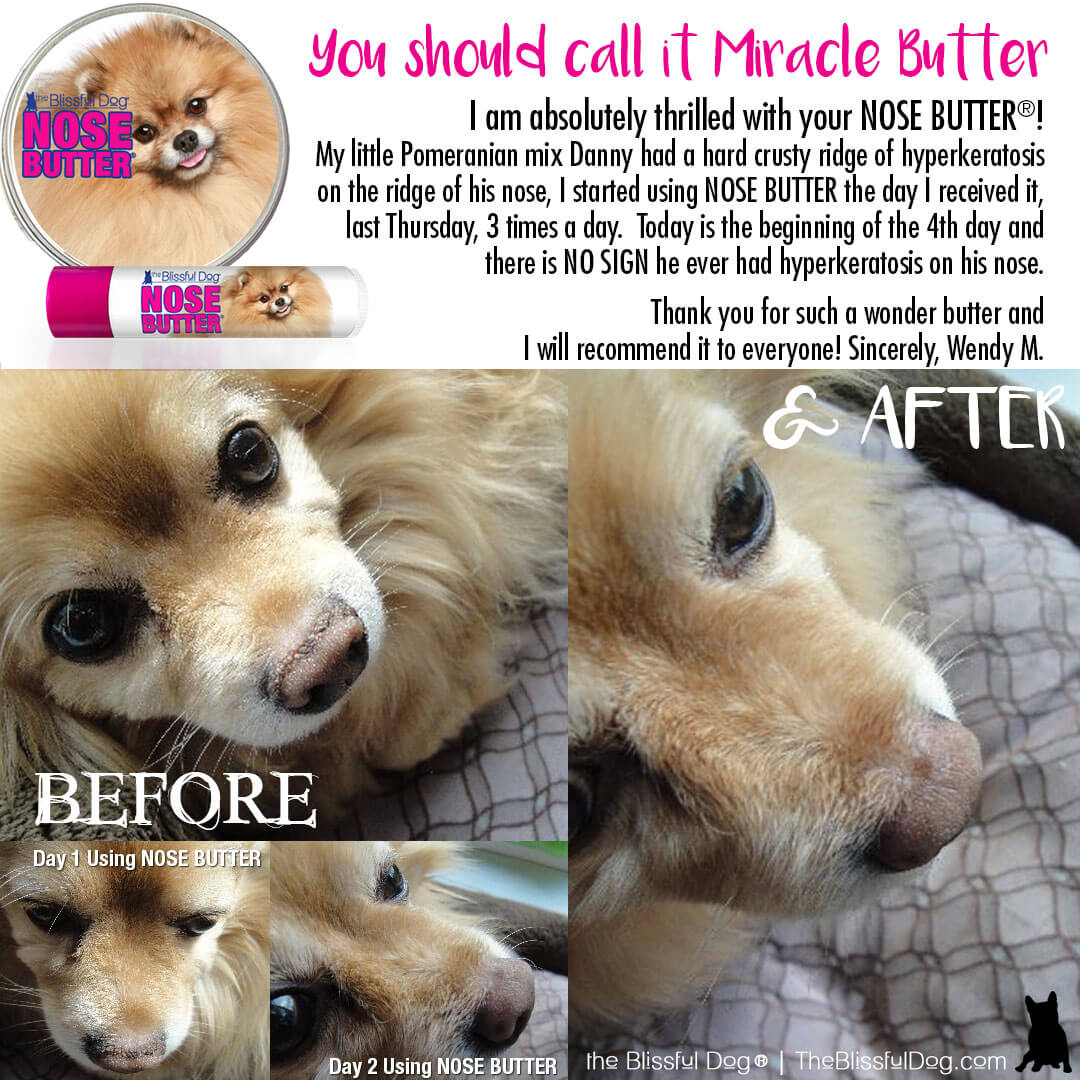 before and after pomeranian nose butter