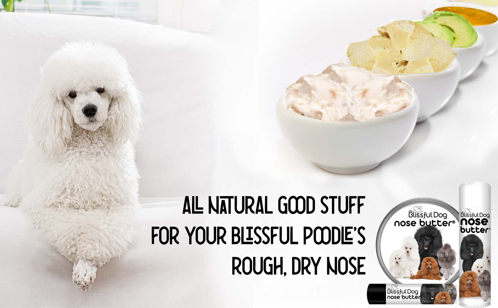 poodle has dry nose
