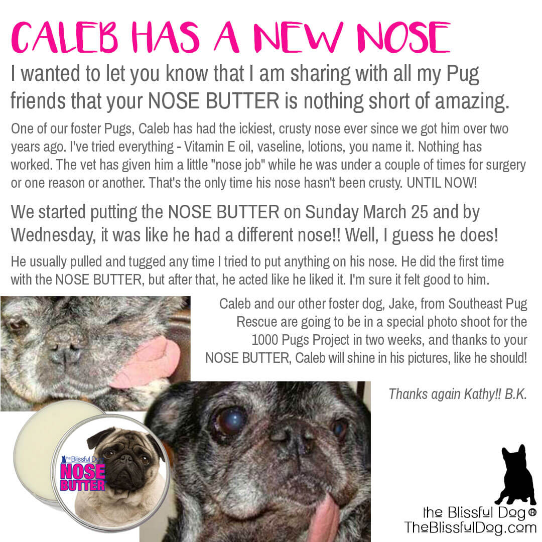 rescue pug nose butter
