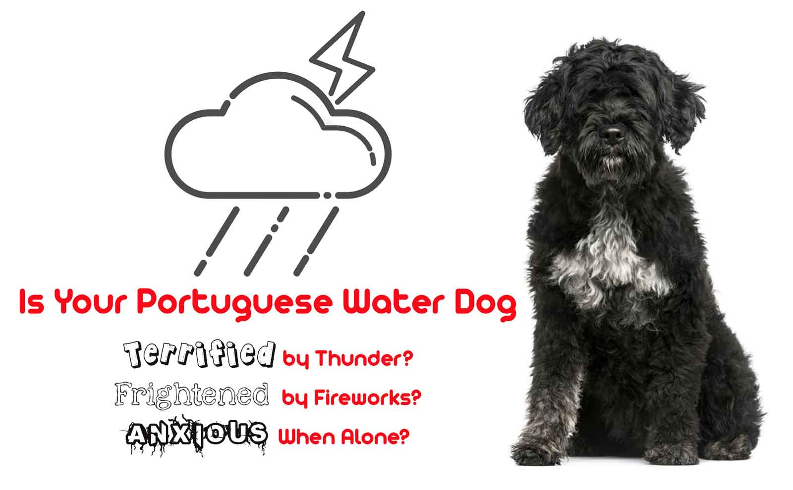 portuguese water dog afraid