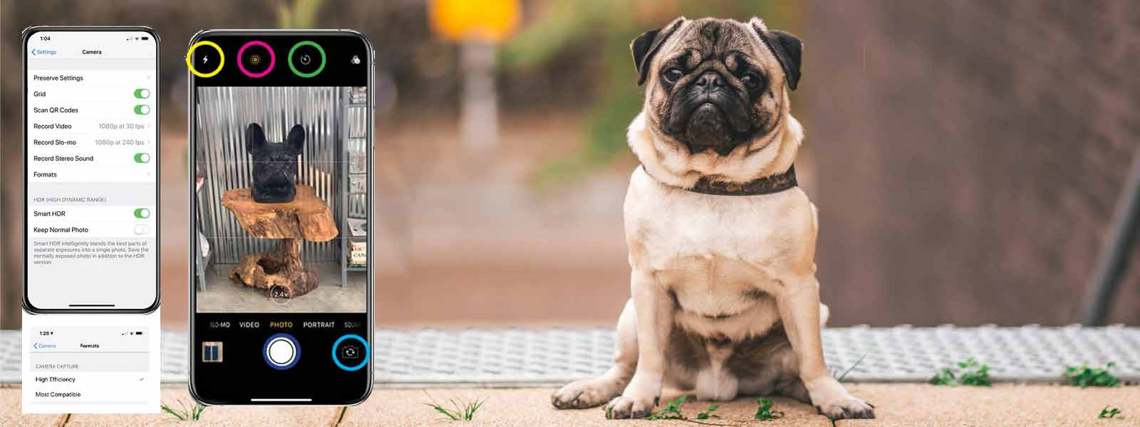 iPhone pictures of your dog