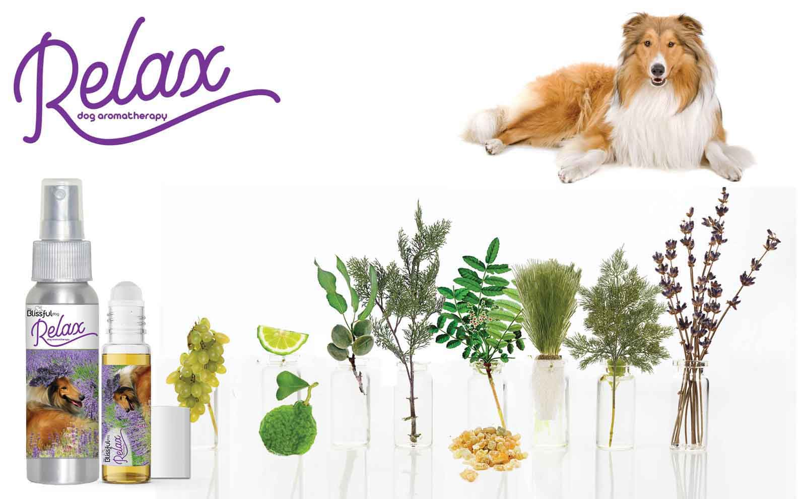 collie natural