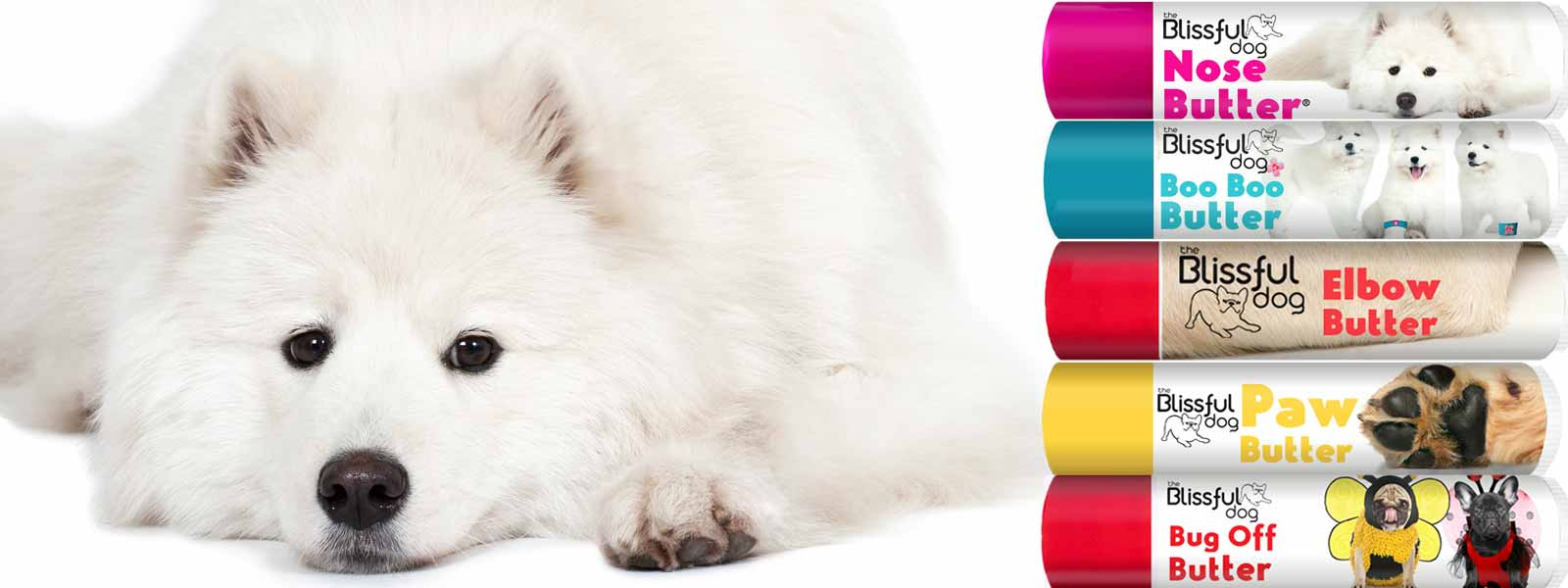 samoyed dog skin