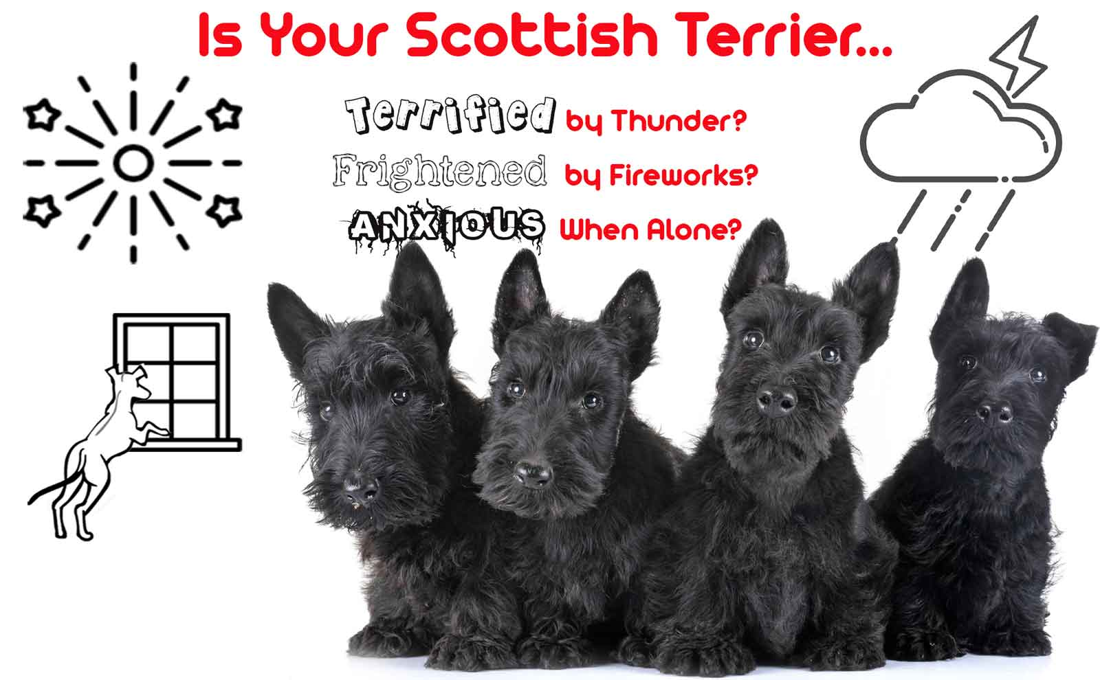 scottish terrier calming