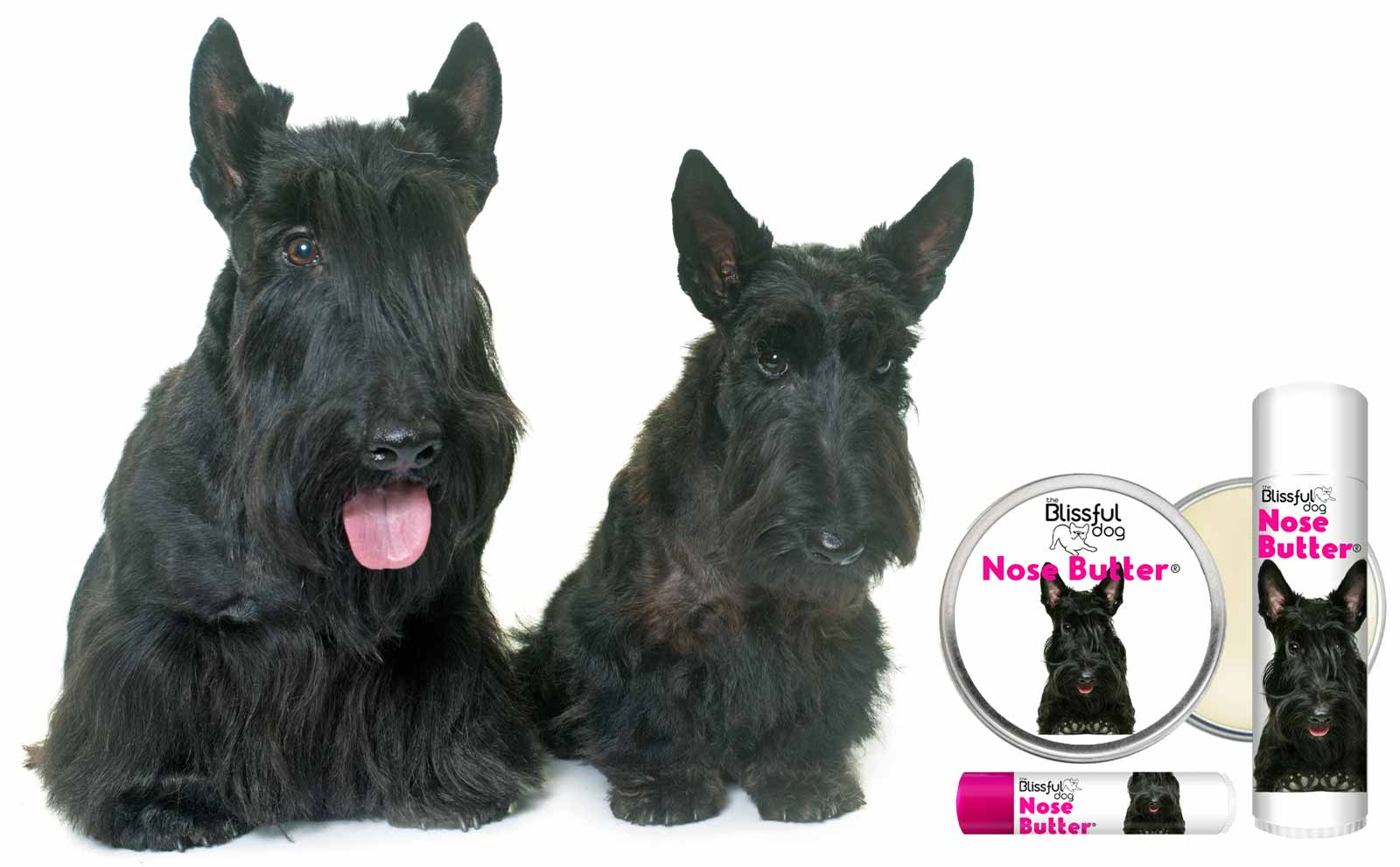 Scottish Terrier dogs