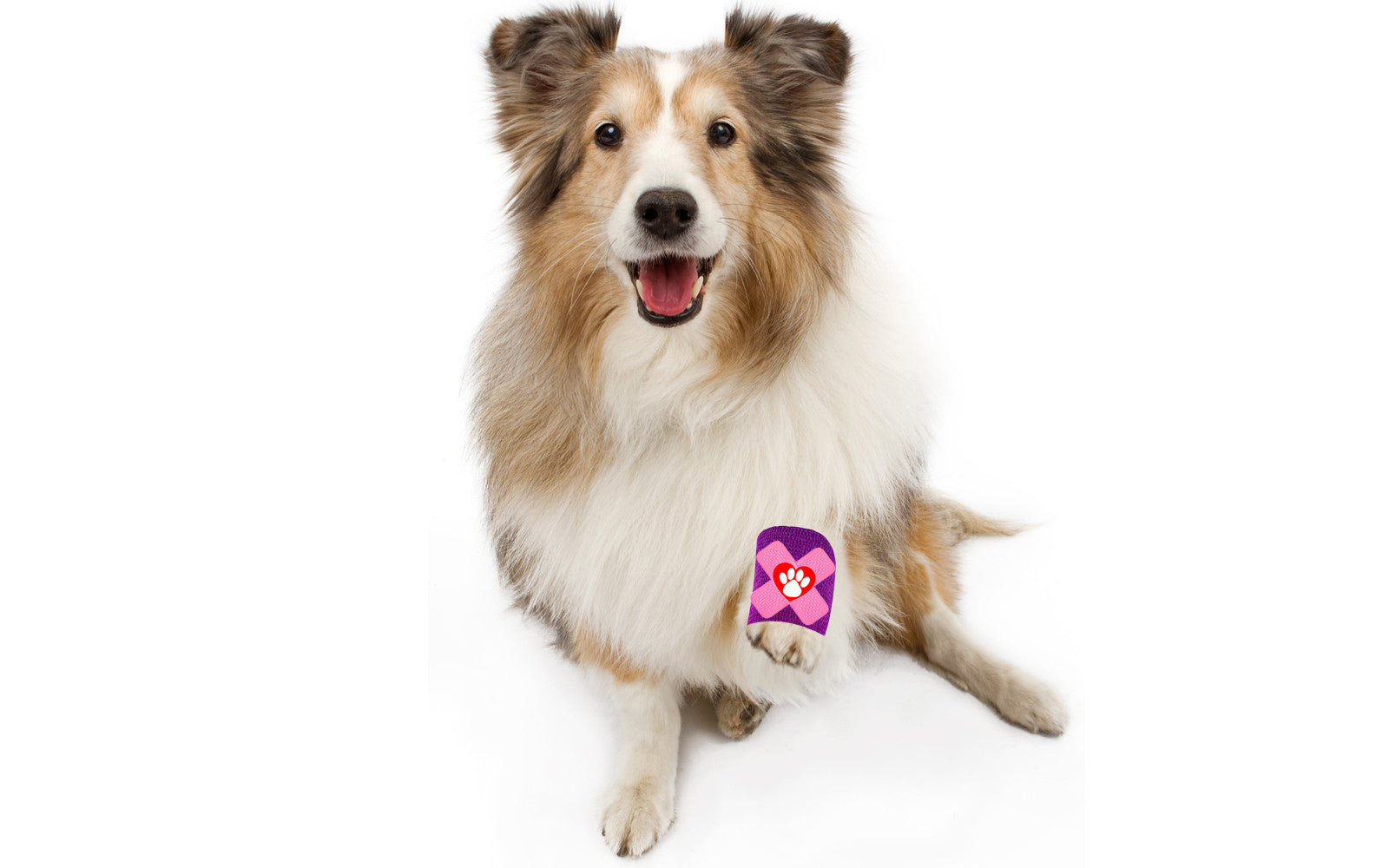 shetland sheepdog minor skin irritation