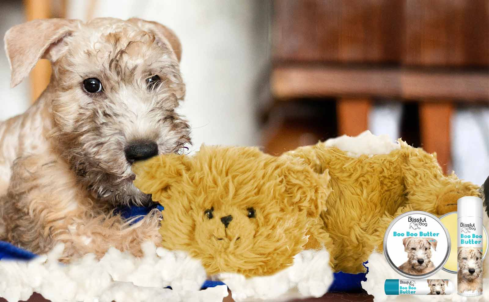 Soft Coated Wheaten terrier itchy