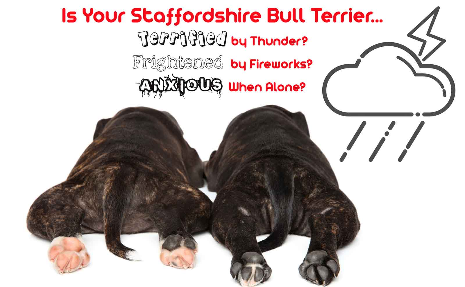 staffordshire bull terrier anxiety