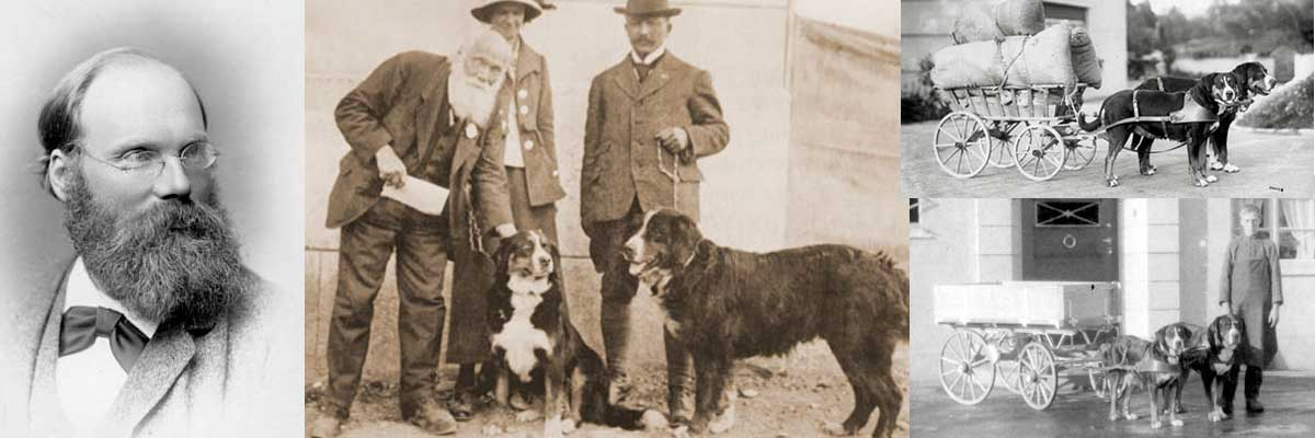 swiss mountain dogs history