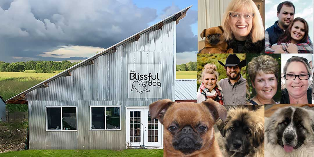 the blissful dog headquarters