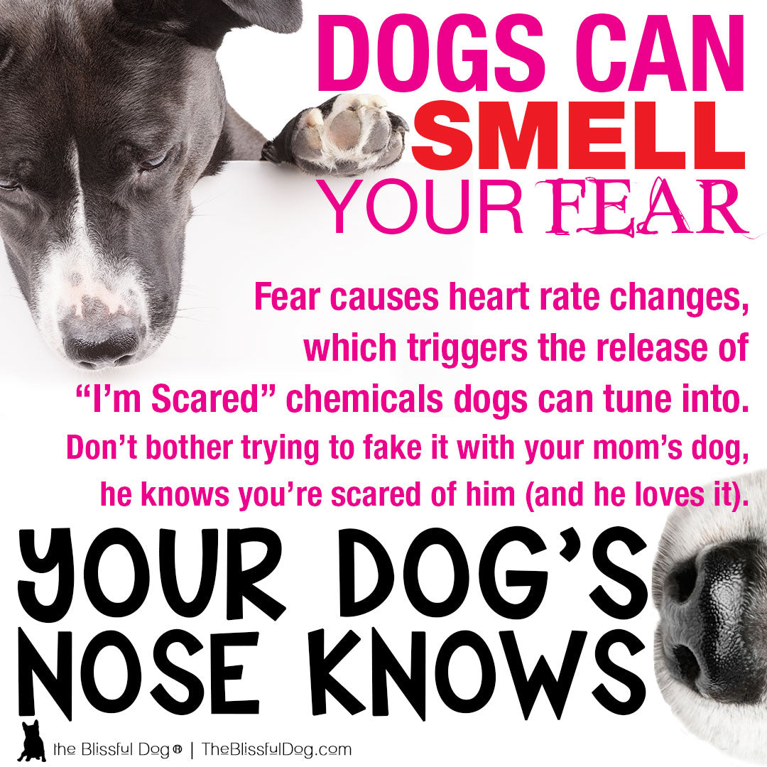 dogs-smell-fear