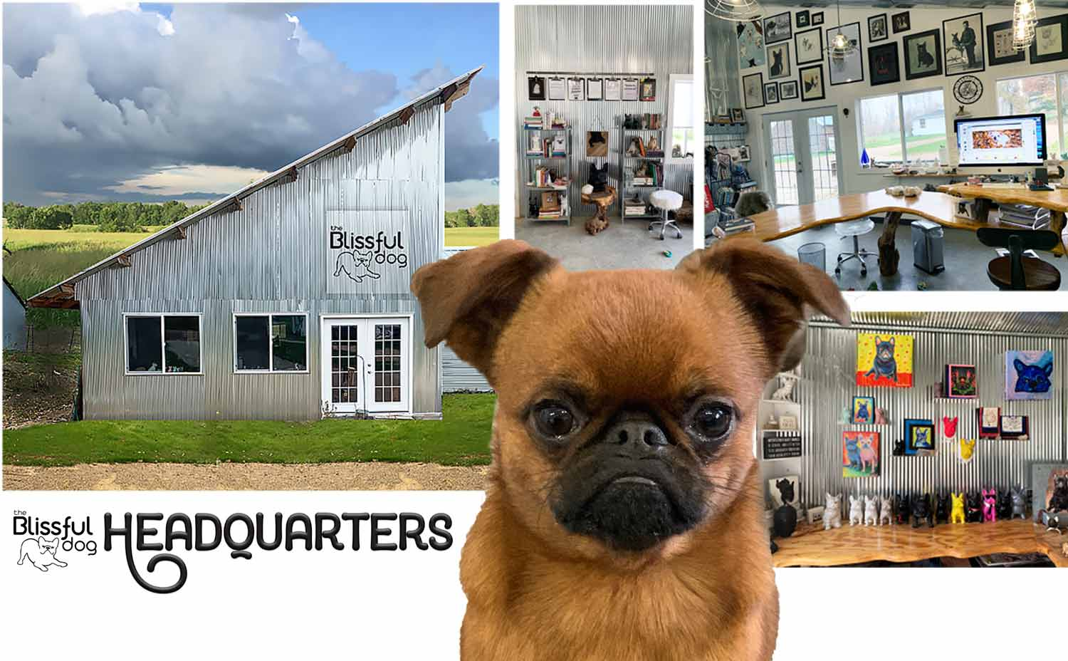 the-blissful-dog-offices