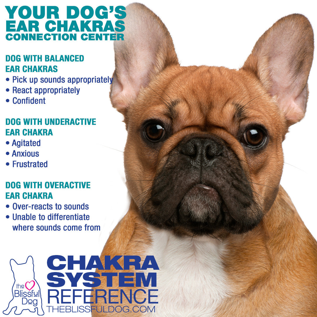 DOG EAR CHAKRAS