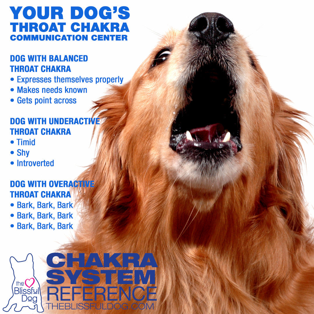 dog throat chakra