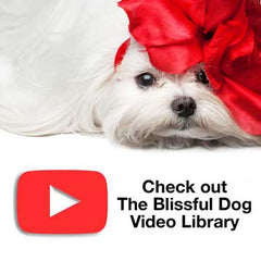 The blissful Dog Video library