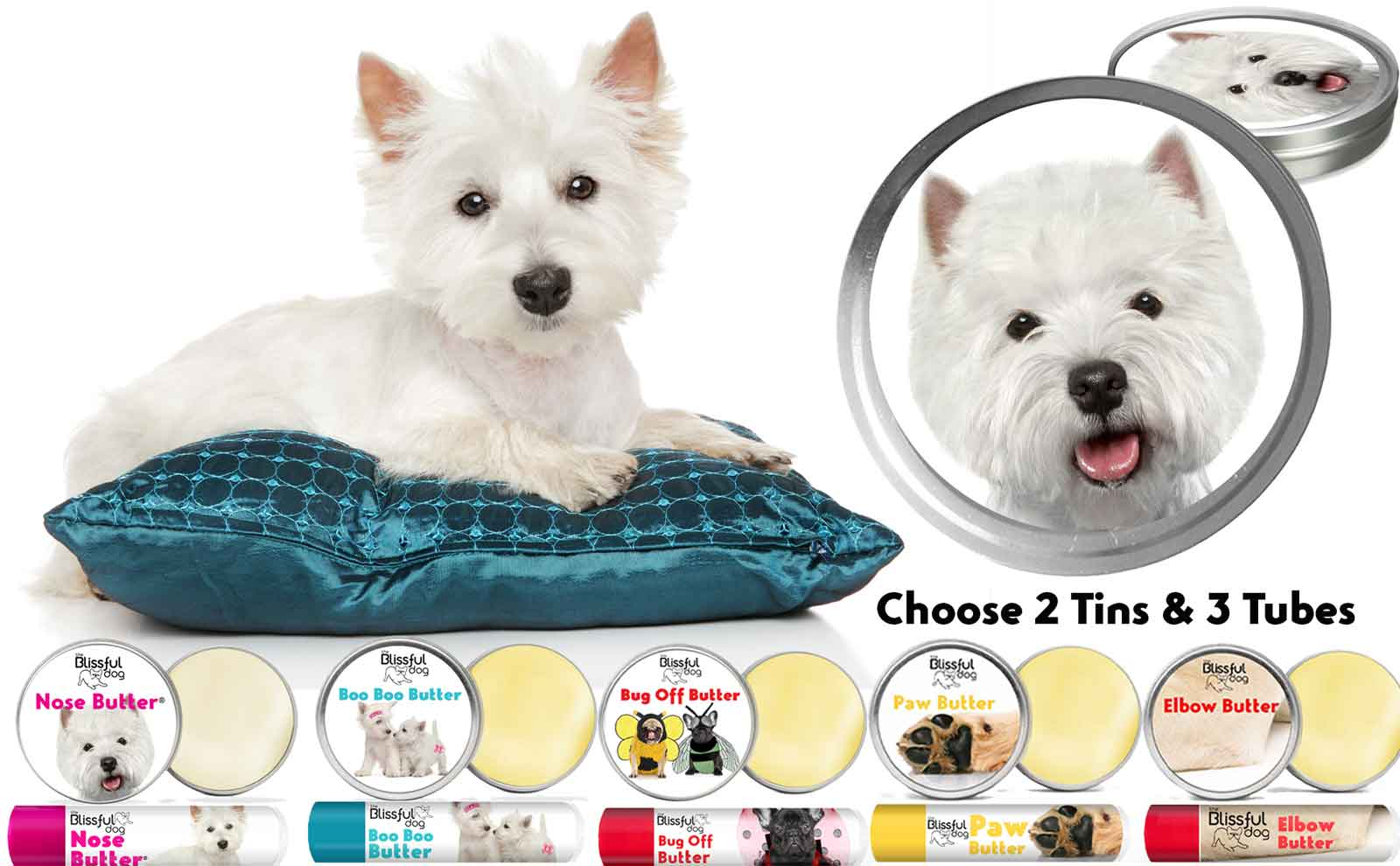west highland white terrier skin care