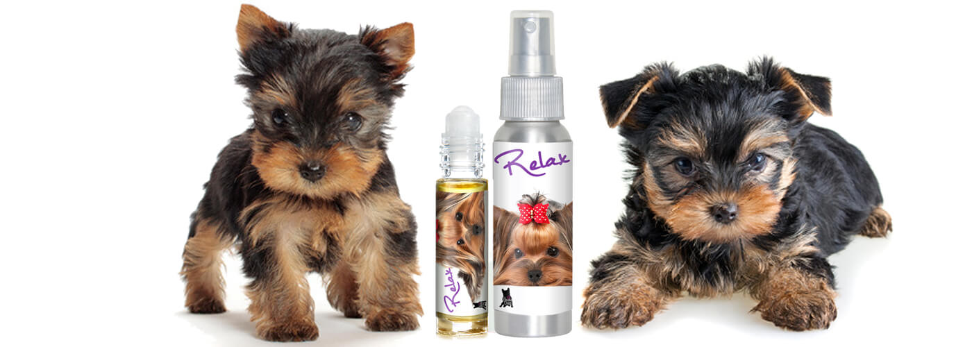 YORKSHIRE TERRIER DOG AROMATHERAPY