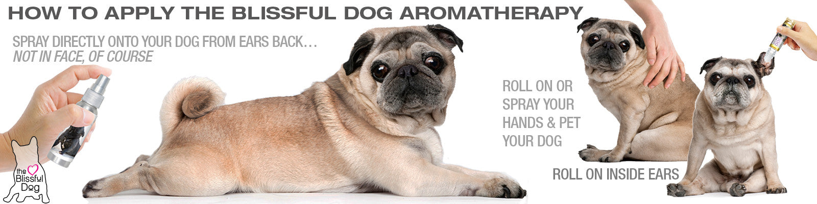 apply relax dog aromatherapy pug