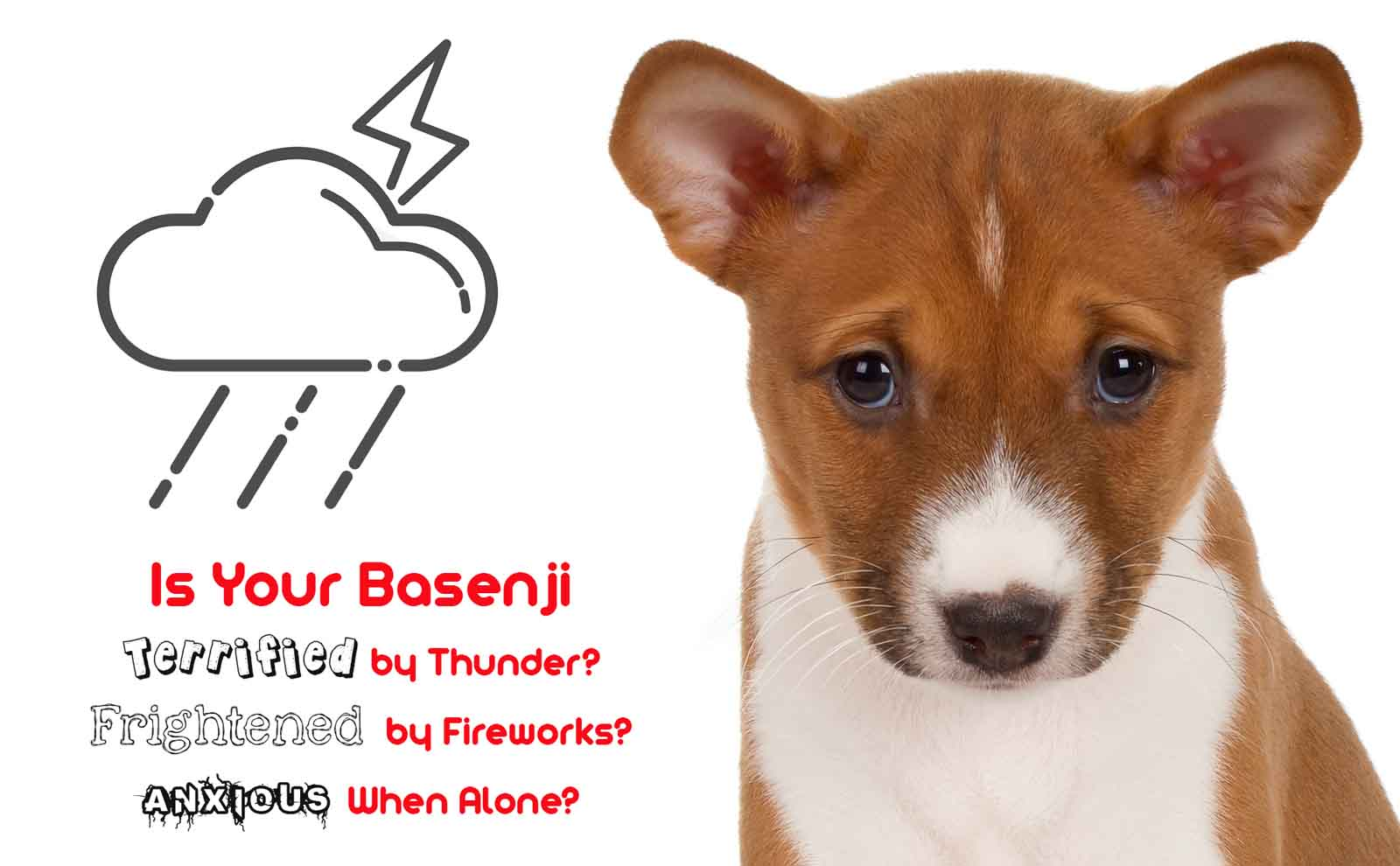 basenji calming spray
