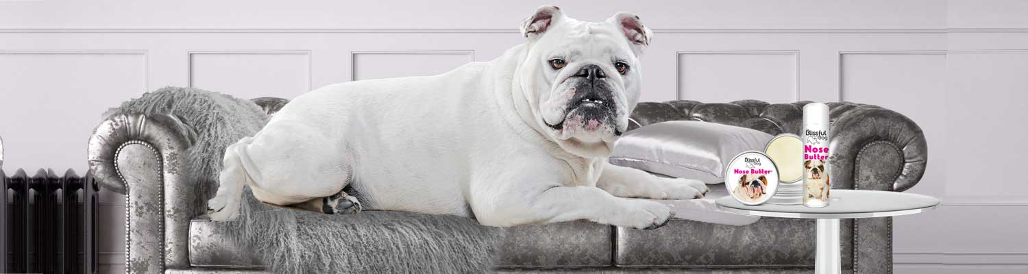 bulldog sofa