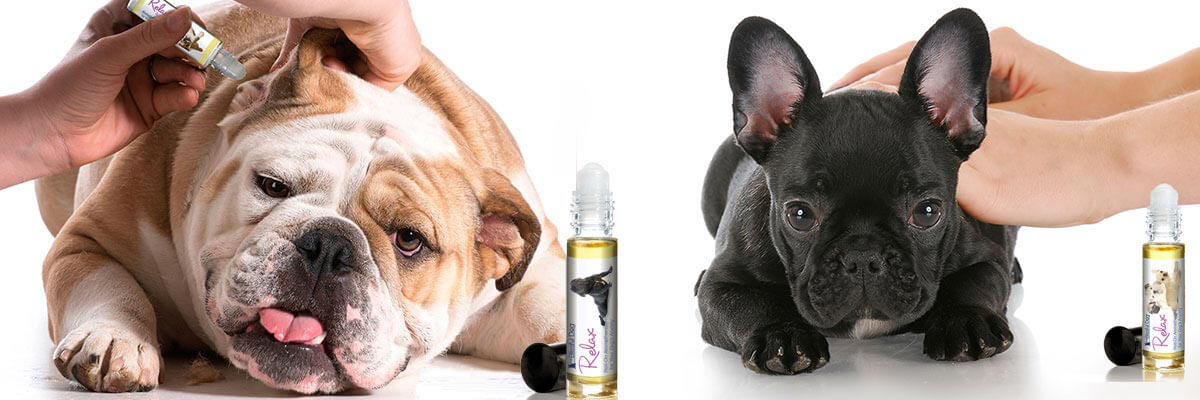 using essential oils on pets