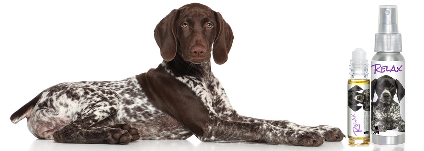 german shorthair afraid thunder