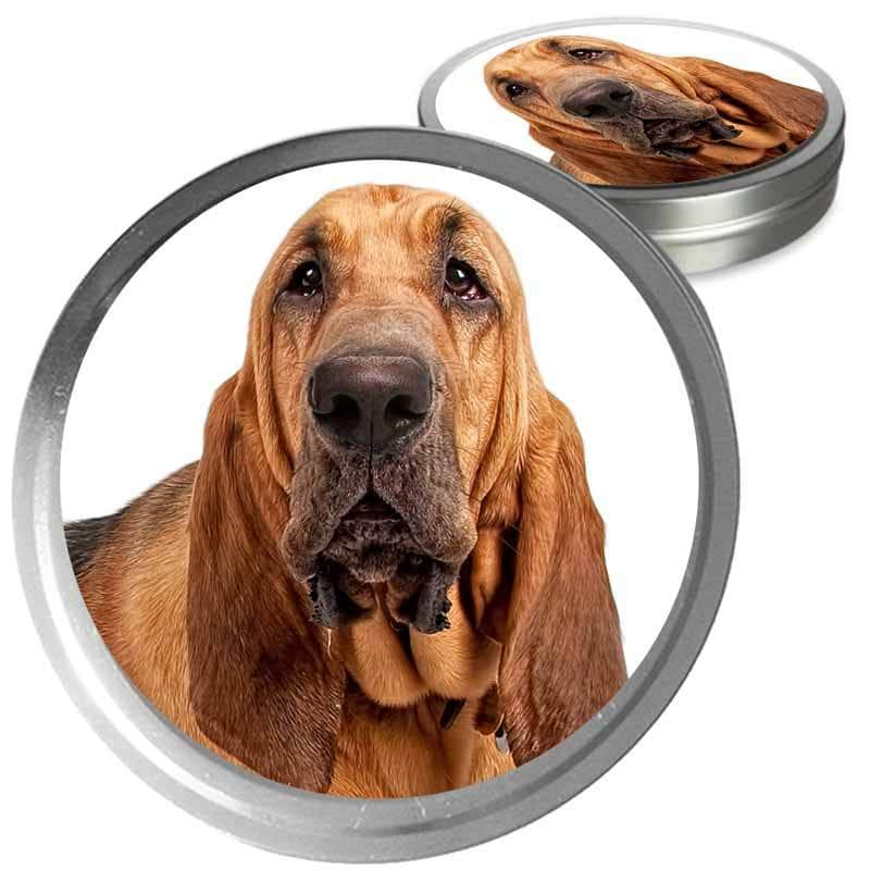 Bloodhound care