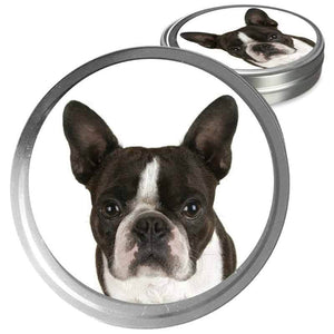 Boston Terrier care