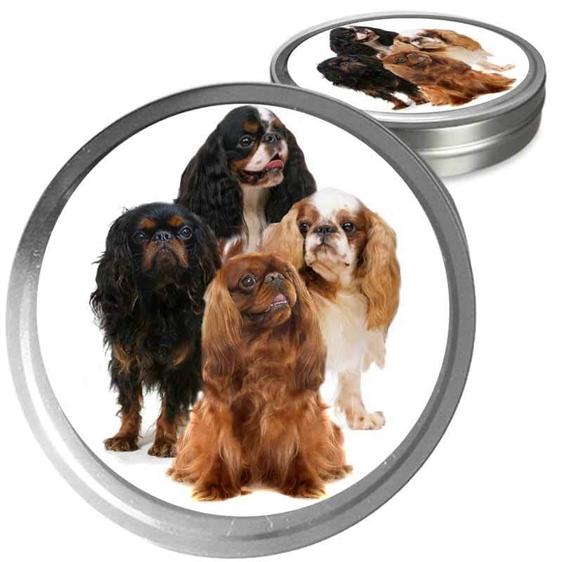 English Toy Spaniel Custom Combo
