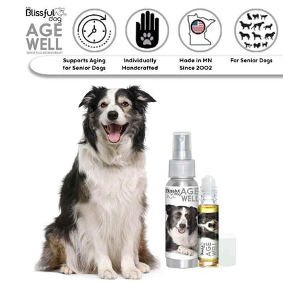 Border Collie Senior Dog Aromatherapy