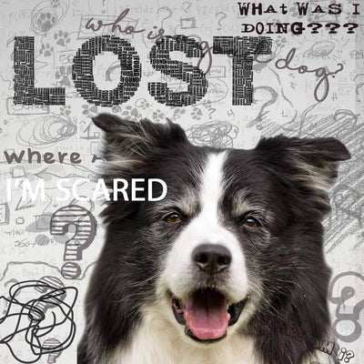 Border Collie Cognitive Problems