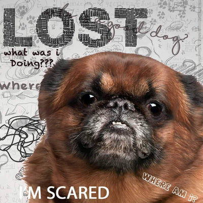 Brussels Griffon Cognitive Disorder