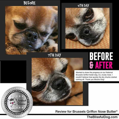 before & after nose butter Brussels Griffon