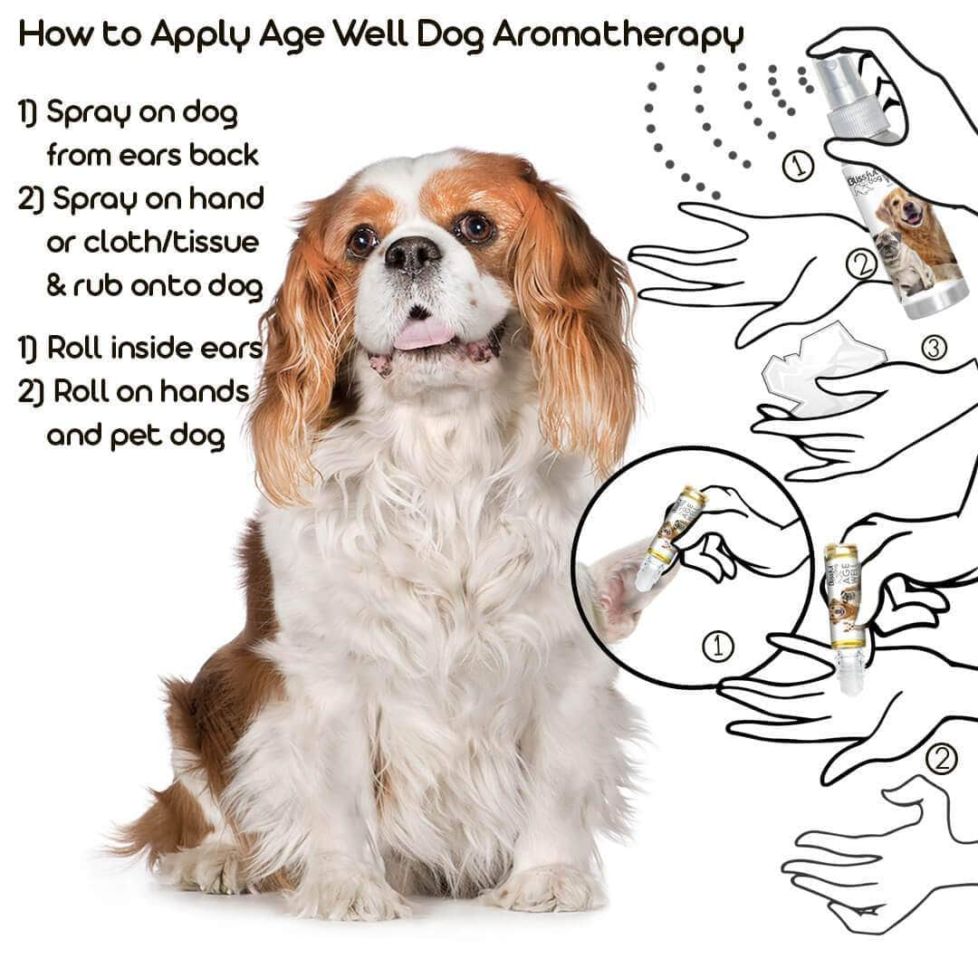 using aromatherapy on your senior dog