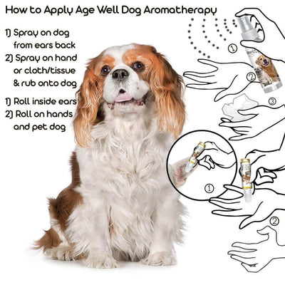 how to apply aromatherapy on old dogs