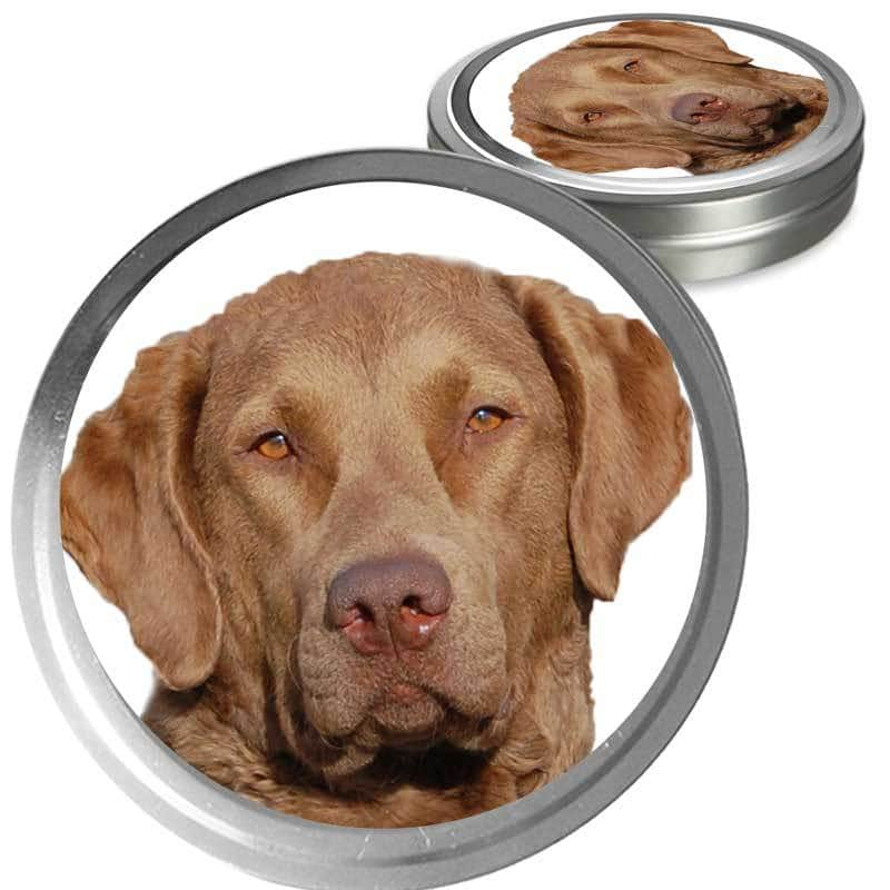 Chesapeake Bay Retriever Custom Combo