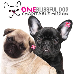 1 ONE BLISSFUL DOG DONATION ITEM (DONATION ONLY)