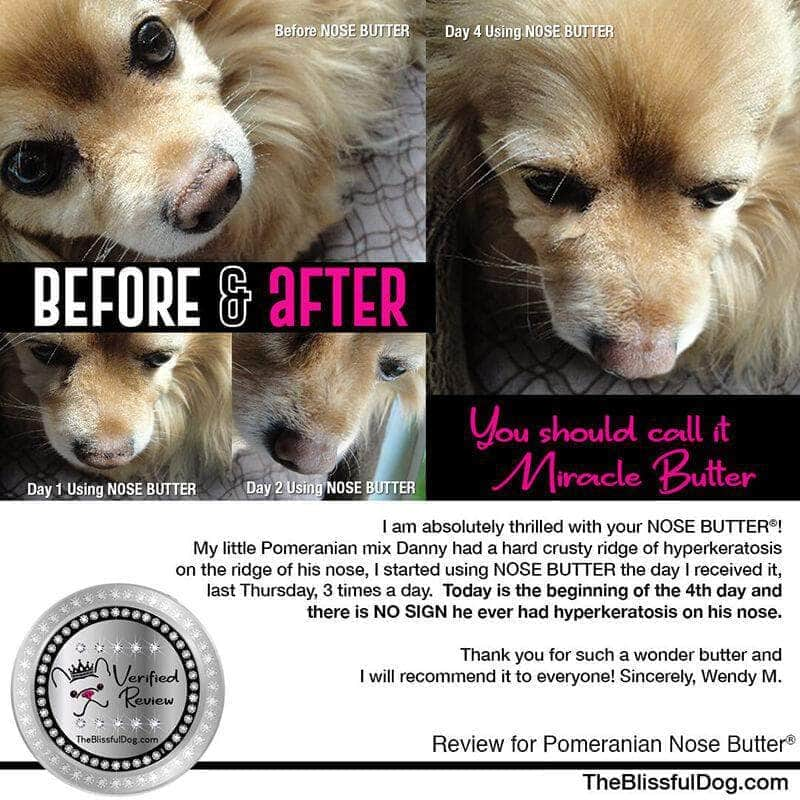 Pomeranian nose butter before & after