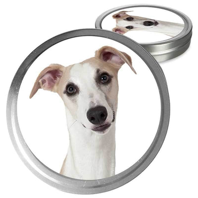 Whippet  care