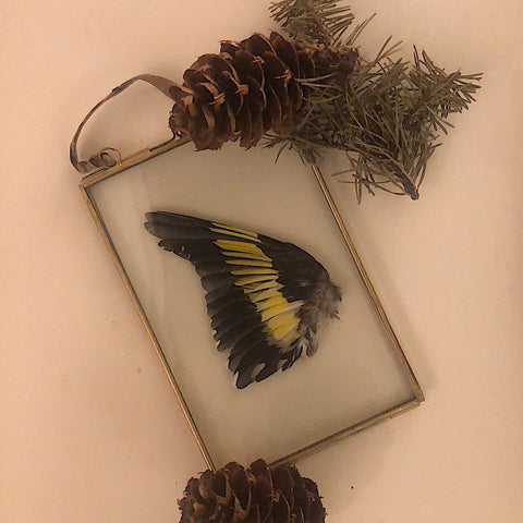 Large Framed Finch Wing