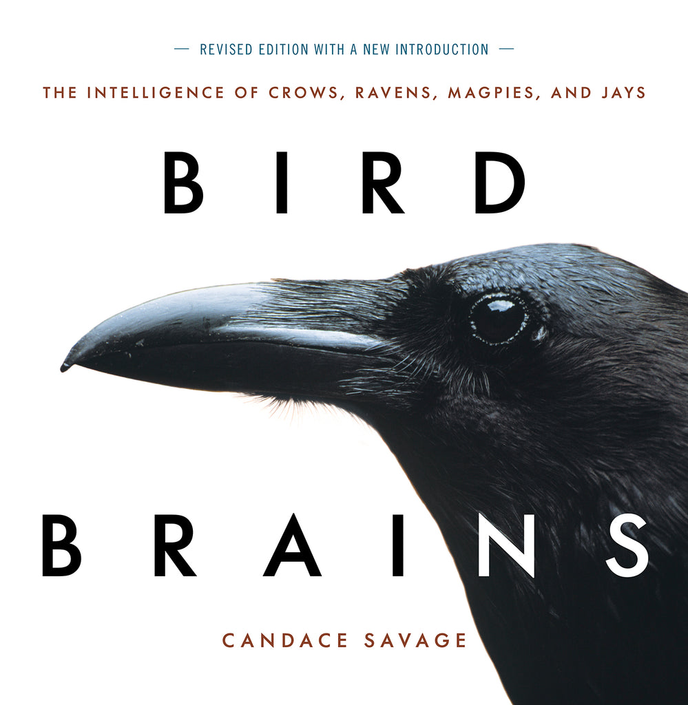 Bird Brains [Revised]