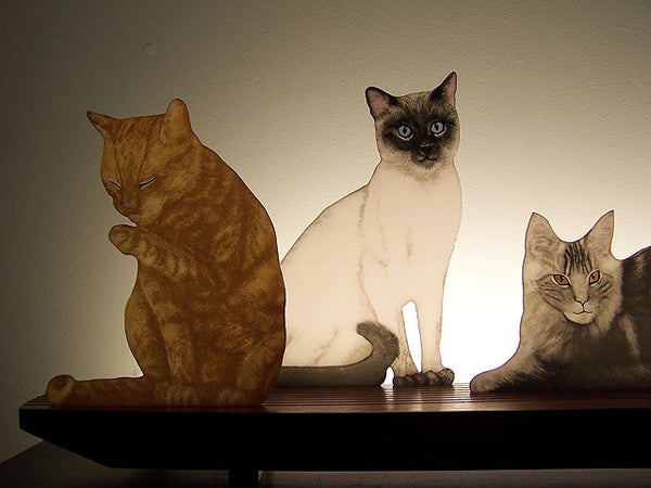 Animal Glasscapes: Mere Cats