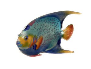 Queen Angelfish, Single