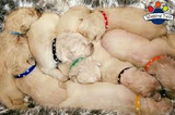 Wagging Tailz Love Hearts Puppy ID Bands Newborn, M, L, XL