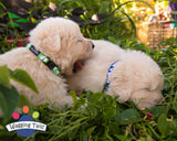 Wagging Tailz Plain or Love Hearts Collars & Leads