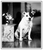 Greeting/Sympathy Cards Dogs - Many Designs!